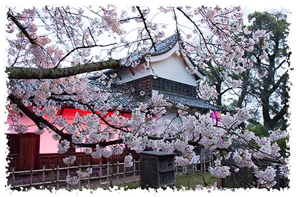 舞鶴の桜2はね