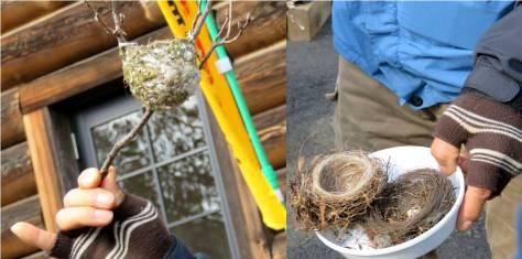 ふれあい森椿洞散策会・鳥の巣
