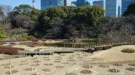 皇居東御苑・二の丸庭園