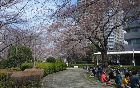 石川島では花見の宴も