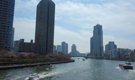 中央大橋から石川島の桜を見る