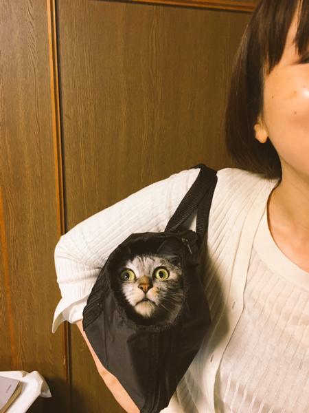 猫「うまく忍び込めたぞ」/飼い主「うまく病院へ連れてけるぞ」