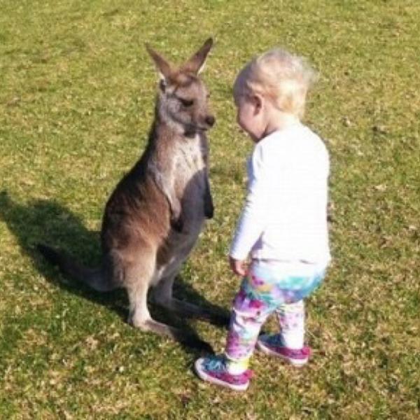 「コラ~おめえどこの園だ!」『おまえこそどこの動物園だ』