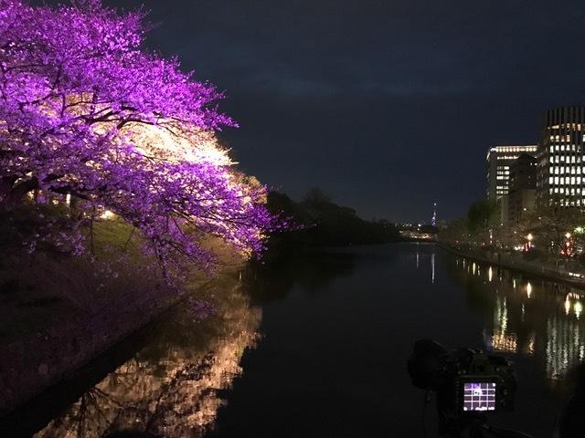 桜2017453