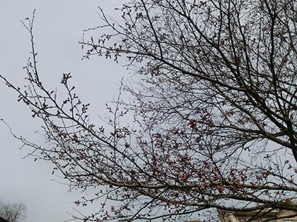 咲いてたよ~ 桜