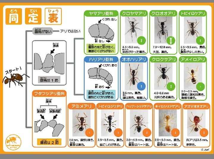 2017_生物教材ワーク開発部_07