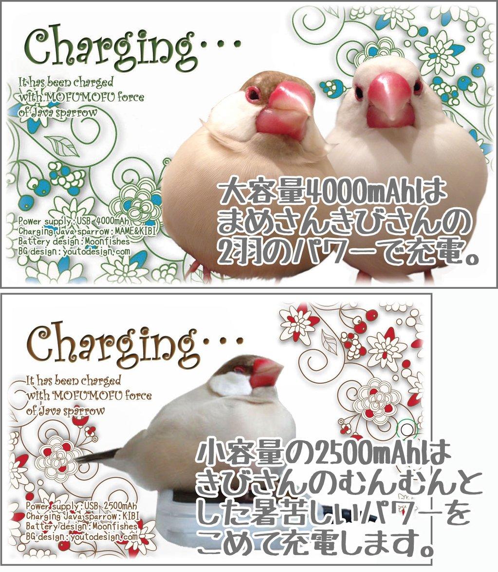 2017_鳥が好きだ_05
