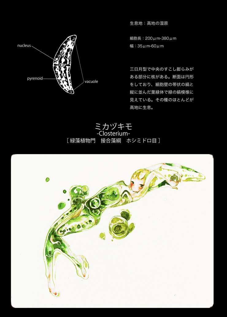 2017_淡水微生物図館_07