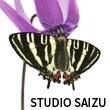 2017_STUDIO SAIZU_logo