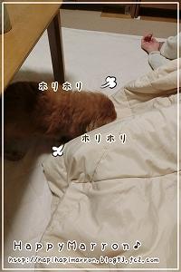 ほりほり1
