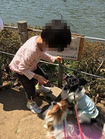 2017-04-15 孫によるしつけ