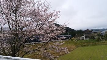 20170408桜と電車3