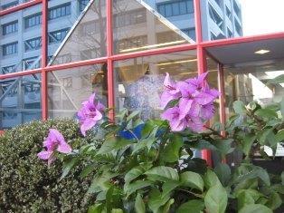 第34回 更年期 鍼灸(はりきゅう)治療院 東京都葛飾区東新小岩 新小岩