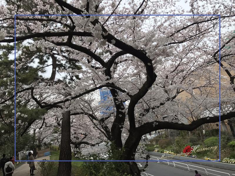 20170405_tokyo_01.jpg