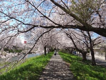 Ushijima2017042301.jpg