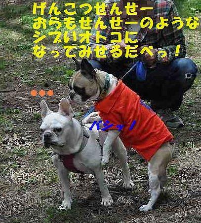 DSC_0261_20150529111153054[1]