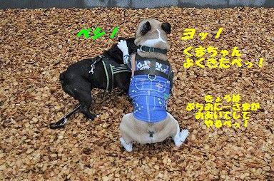 DSC_0063_2017041211530441e.jpg