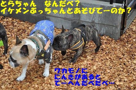 DSC_0093_20170412144732734.jpg