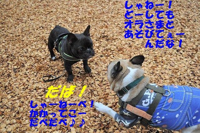 DSC_0101_20170412160940505.jpg
