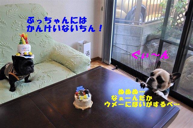 DSC_0237_20170417091101db6.jpg