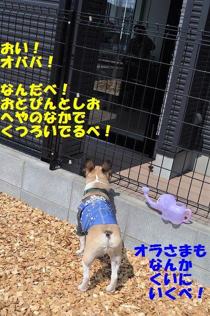 DSC_0326_20170321155707a4d.jpg