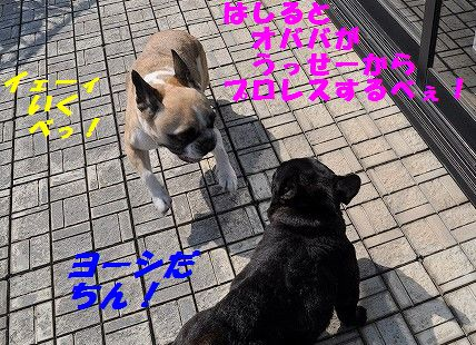 DSC_0357_20170322145241e26.jpg