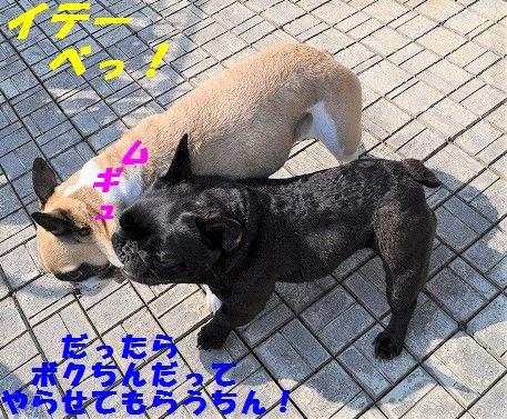DSC_0367_20170322154821be7.jpg