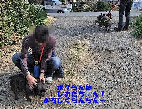 DSC_0396_201703231432325a8.jpg