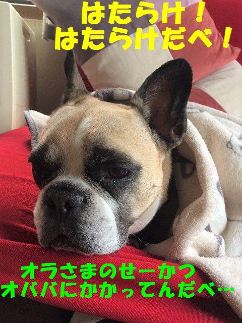 IMG_1505_201703291114281c9.jpg