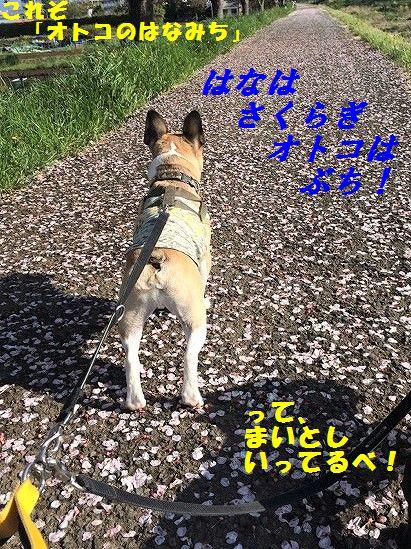 IMG_2076_20170426101634d3e.jpg