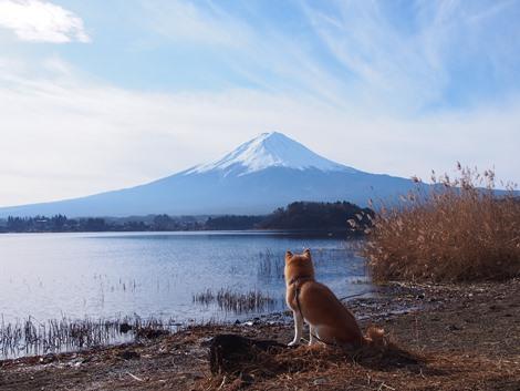 富士山を拝む~