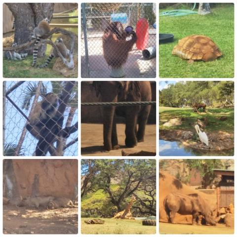 平成29年4月12日動物園3