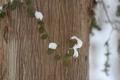 冬から春2