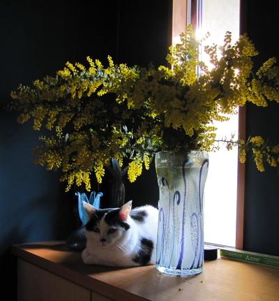 mimoza1702-2.jpg