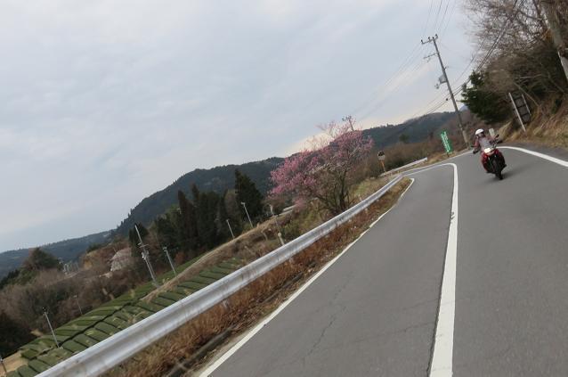IMG_7239bb.jpg