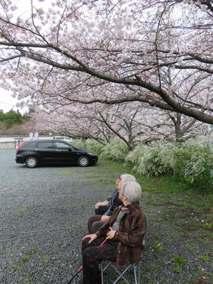 花見の写真3