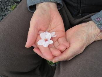 花見の写真7