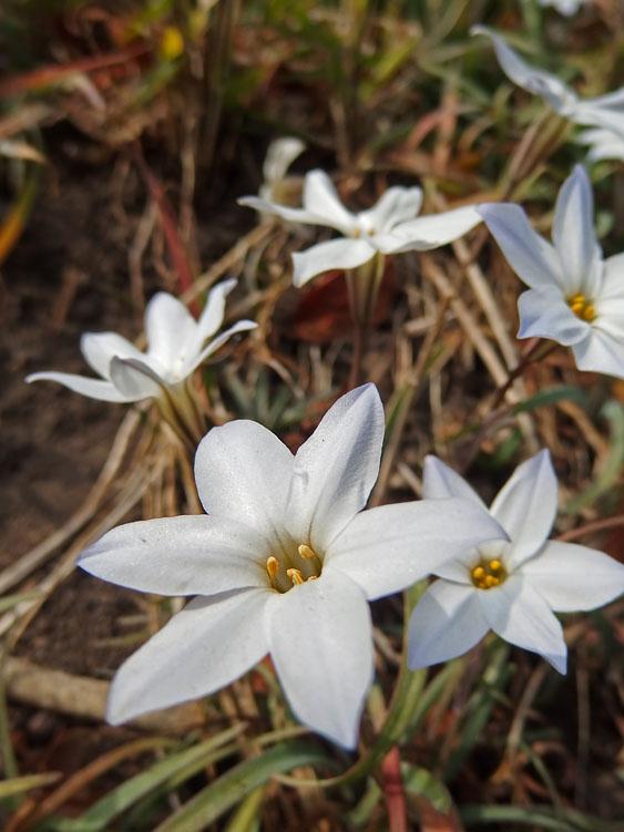 170301昼休みの花たち4