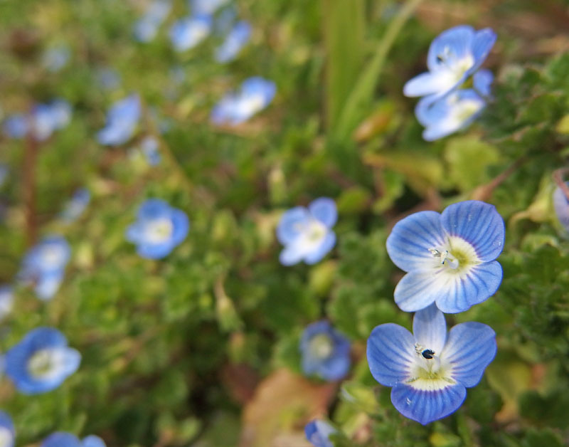170301昼休みの花たち2