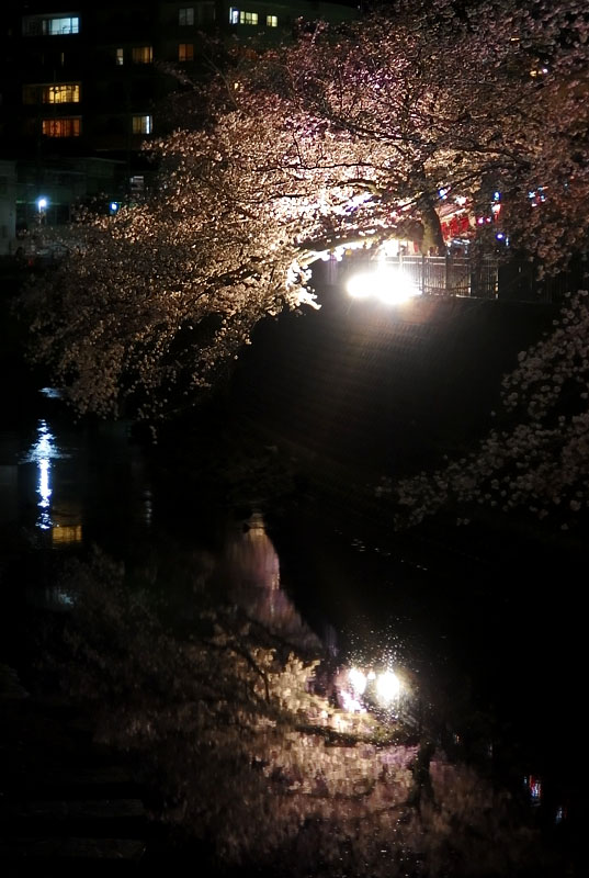 1704大岡川夜桜1