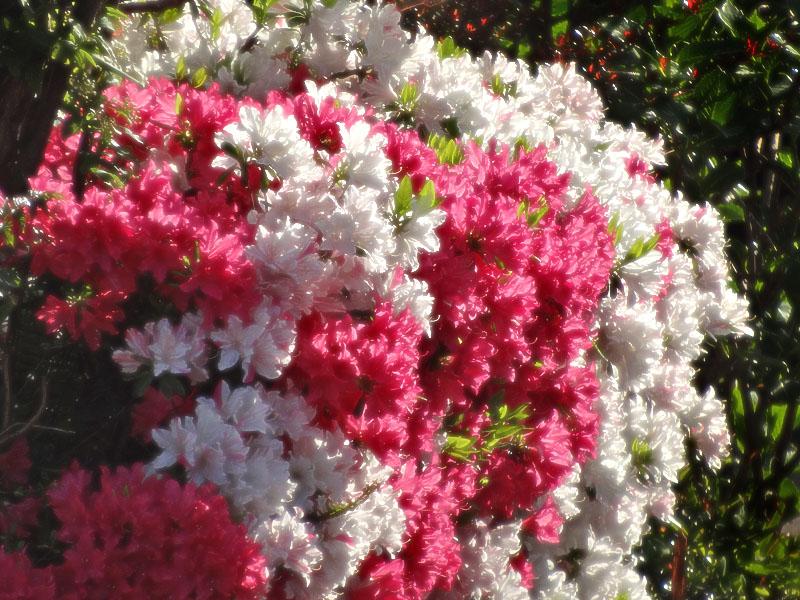 17030419,季節を先取りする花たち4