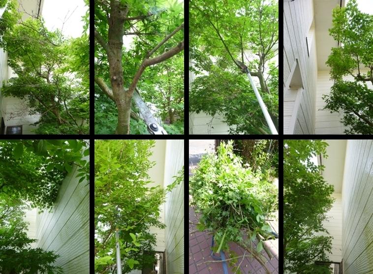 P2120035-horz-vert.jpg