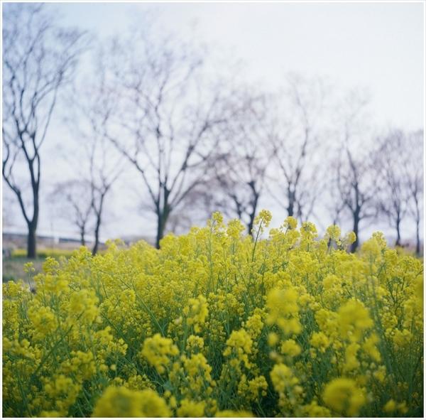 1-n-1-ローライⅢ河川環境楽園2017-4-1-portra400-49050004_R
