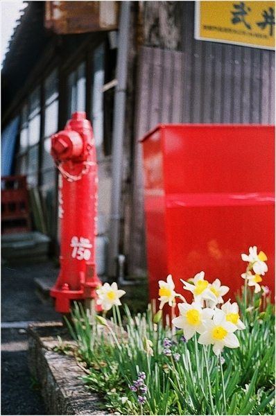 -n-シグネット35 杵振り祭り 2017-4-16 フジ100-38-57200038_R