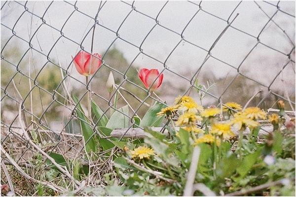 -p-n-シグネット35 杵振り祭り 2017-4-16 フジ100-26-57200026_R