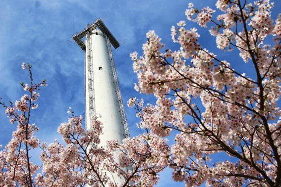 煙突と桜1