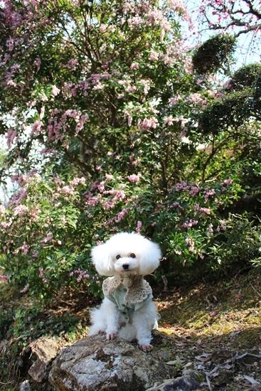 お庭でお花見♪