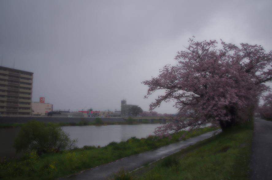 170411sakura.jpg
