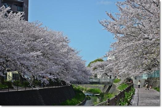 志井川-1