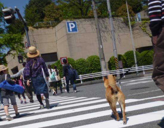 ロング散歩1(2017/4/26)ロング散歩1(2017/4/26)_convert_20170426185327